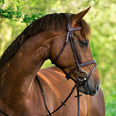 Bridle Classic full WITHOUT BIT