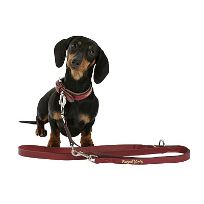 Leash Royal Pets 25mmx200cm  brown / red
