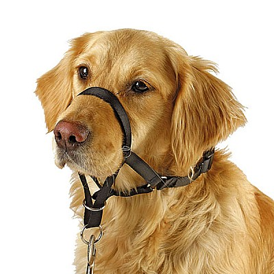 Harness For Training And Education Maxi Coach Snout Circ. < 54 cm