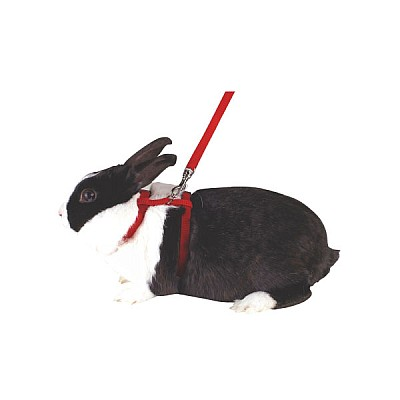 Rodent Harness With Leash