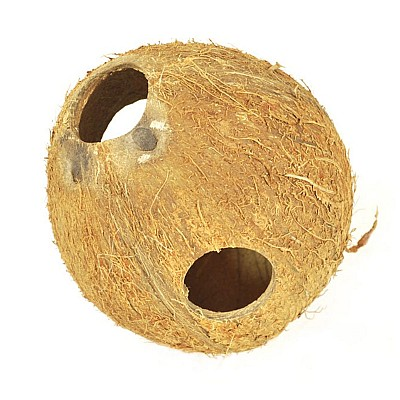 Coconut shell full unbrushed 1piece D605